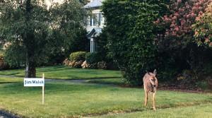 Sign-deer